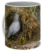 American Dipper Building Nest   #1535 Coffee Mug