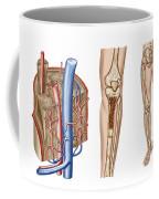 Anatomy Of Human Bone Marrow Coffee Mug