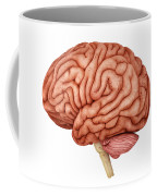 Anatomy Of Human Brain, Side View Coffee Mug