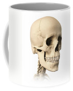 Anatomy Of Human Skull, Side View Coffee Mug