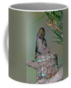 Annas Hummingbird Feeding Young Coffee Mug