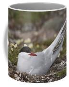 Arctic Tern In Its Nest Coffee Mug
