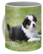 Australian Shepherd Puppy Coffee Mug