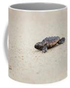 Baby Loggerhead Sea Turtle Amelia Island Florida Coffee Mug