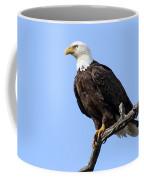 Bald Eagle 6 Coffee Mug