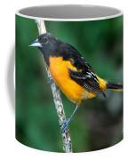 Baltimore Oriole Icterus Galbula Coffee Mug