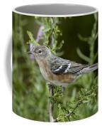 Bay-breasted Warbler Coffee Mug