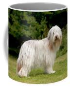 Bearded Collie Dog Coffee Mug