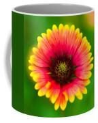 Beautiful Daisy Coffee Mug