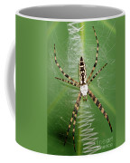 Black And Yellow Garden Spider Coffee Mug