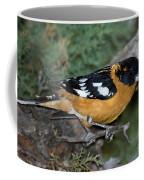 Black-headed Grosbeak Male Coffee Mug