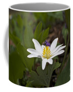 Bloodroot Wildflower - Sanguinaria Canadensis Coffee Mug