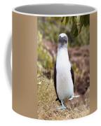 Blue Footed Boobie Dancing Galapagos Coffee Mug
