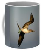 Blue-footed Booby, Sula Nebouxii, Santa Coffee Mug