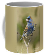 Blue Grosbeak Coffee Mug