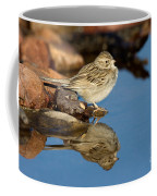 Brewers Sparrow At Waterhole Coffee Mug