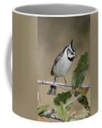 Bridled Titmouse Coffee Mug