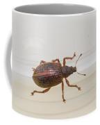 Broad-nosed Weevil - Polydrusus Mollis Coffee Mug