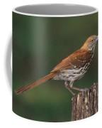 Brown Thrasher Coffee Mug