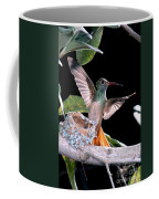 Buff-bellied Hummingbird At Nest Coffee Mug