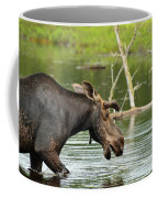 Bull Moose Coffee Mug
