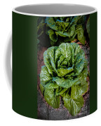 Butterhead Lettuce Coffee Mug
