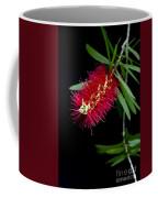 Callistemon Citrinus - Crimson Bottlebrush Hawaii Coffee Mug