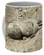 Caspian Tern Coffee Mug