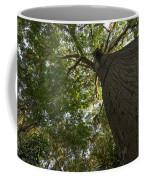 Ceiba Tree Coffee Mug