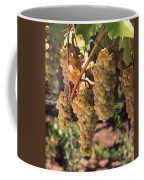 Chardonnay Grapes In Vineyard, Carneros Coffee Mug