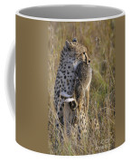Cheetah Carrying Its Prey Coffee Mug