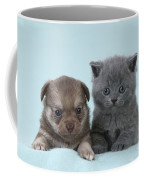 Chihuahua Puppy And British Shorthair Coffee Mug