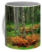 Cinnamon Ferns And Red Spruce Trees Coffee Mug