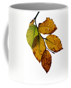 Colorful Leaves Isolated On A White Background Coffee Mug