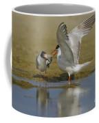 Common Tern Sterna Hirundo Coffee Mug by Eyal Bartov