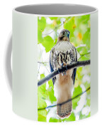 Coopers Hawk Perched On Tree Watching For Small Prey Coffee Mug