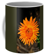 Country Colors Coffee Mug