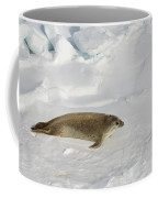 Crabeater Seal, Antarctica Coffee Mug
