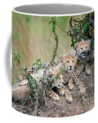 Curious Kittens Coffee Mug