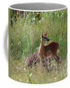 Curious Whitetail Coffee Mug