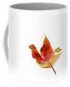 Curled Autumn Leaf Isolated On White Coffee Mug