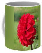 Dahlia Named Ali Oop Coffee Mug