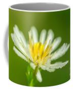 Daisy Fleabane Erigeron Annuus Coffee Mug