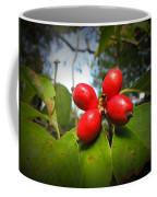 Dogwood Berries Coffee Mug