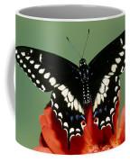 Eastern Black Swallowtail Butterfly Coffee Mug