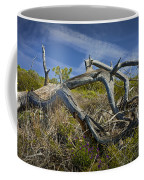 Fallen Dead Torrey Pine Trunk At Torrey Pines State Natural Reserve Coffee Mug