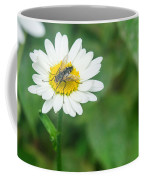 Fly On Daisy 3 Coffee Mug