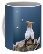 Fou De Bassan Morus Bassanus Coffee Mug