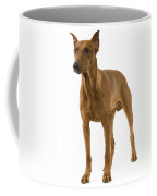 German Or Standard Pinscher Coffee Mug