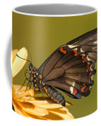 Gold Rim Swallowtail Butterfly Coffee Mug